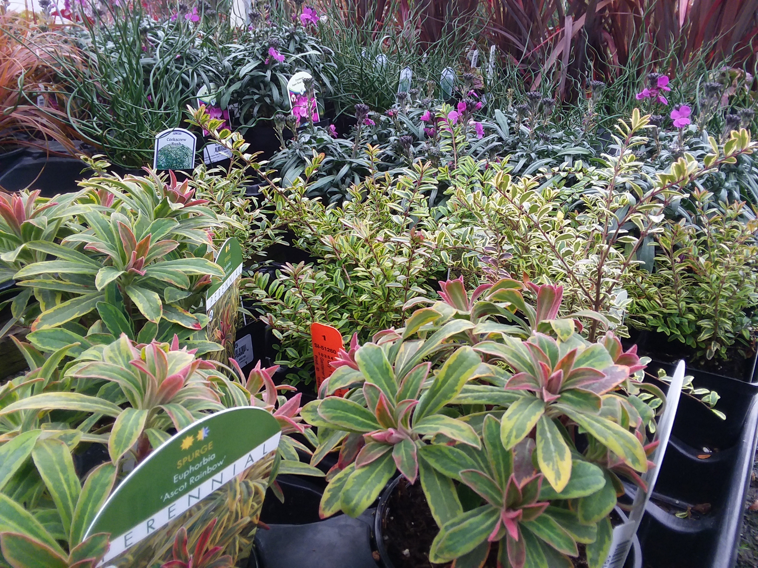 Perennials for winter garden interest